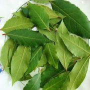 Свойства лаврового листа, как использовать при аллергии